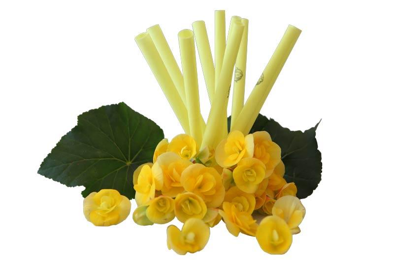 IL-DO® Körperkerzen Gelb